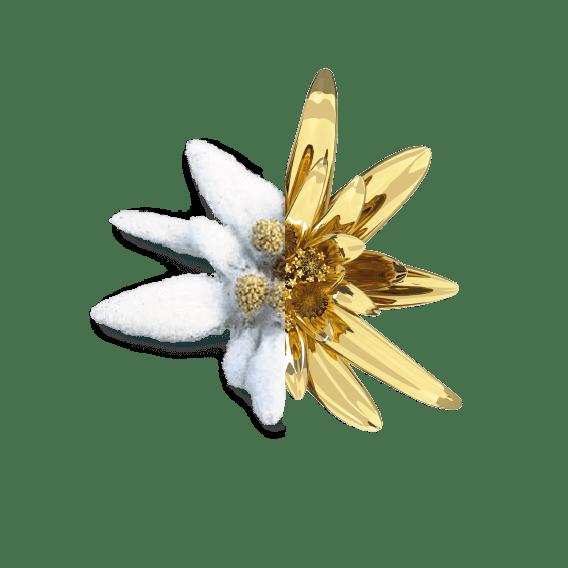 Bellefontaine Edelweiss Flower
